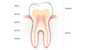 Постоянные и молочные зубы: в чем разница?